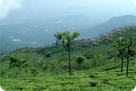 Ooty & Munnar Tours